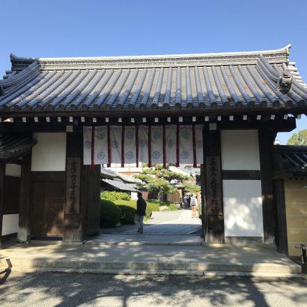 大覚寺の見どころは回廊から眺める紅葉と右近橘・左近梅