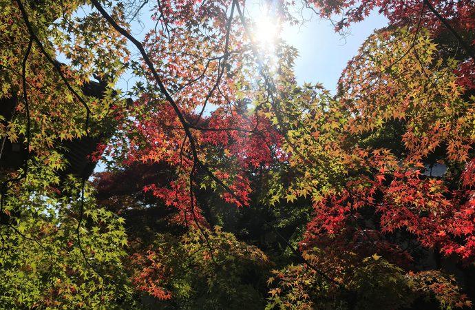 常寂光寺の見どころ紅葉を作り上げた住職の努力