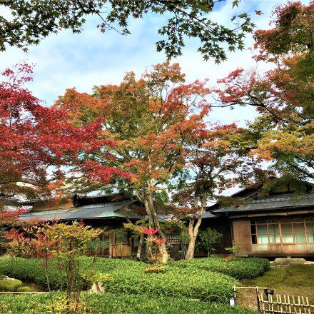 宝厳院の見どころは青もみじのライトアップと紅葉の庭